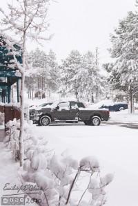Woodland Park Snow