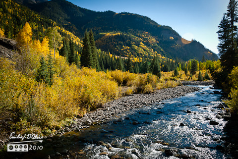 River and aspens