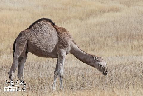 Colorado Camels - October