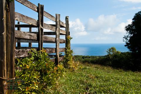 Road to Hana - Maui, HI