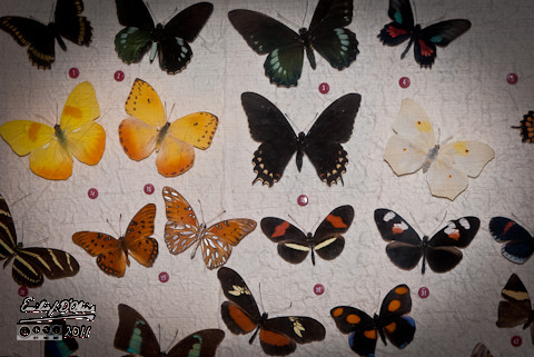 Colorful butterfly graveyard