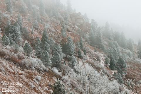 Ute Pass shrouded in freezing fog