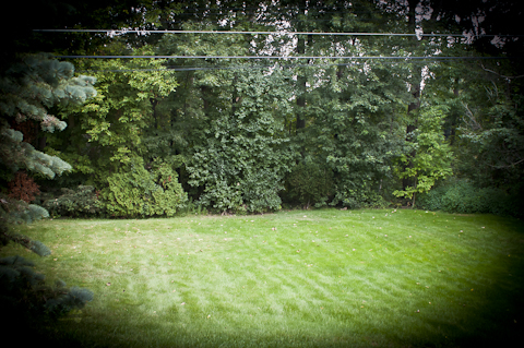 South portion of the back yard