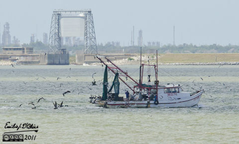 Shrimping boat and entourage