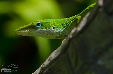 A gecko in the shade