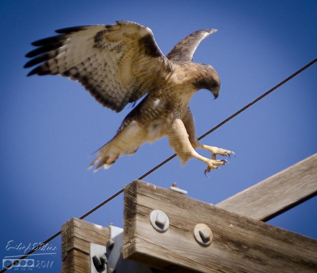 Landing near his new perch