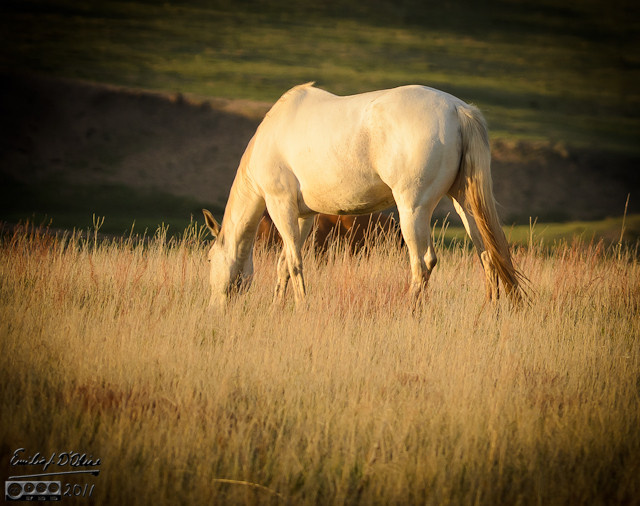 End of may got me this late evening picture of a horse grazing on a field next to County Line Road.