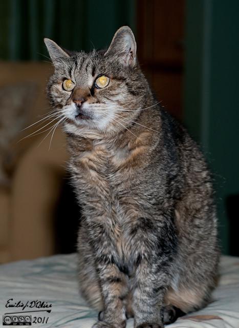 Miss Kitty - June 1991- September 2011