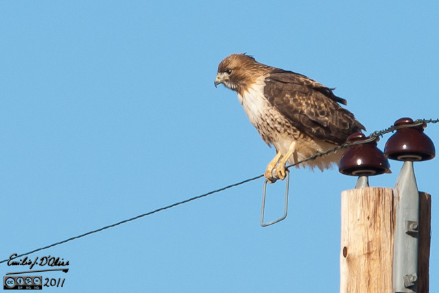 Like most years, I took a lot of shots of hawks . . .