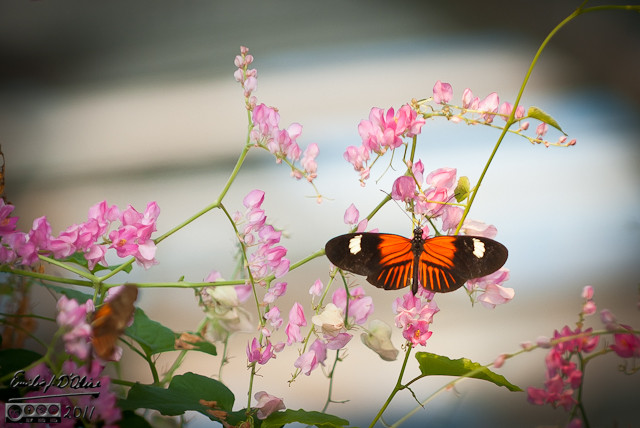 Denver Butterfly Pavilion