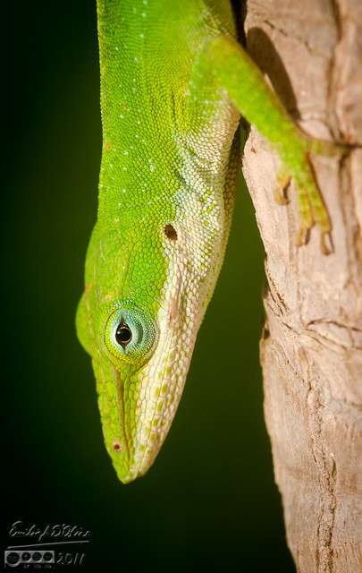 This gecko also offered up photo opportunities aplenty.