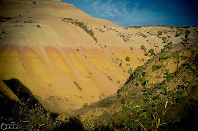 The golden hills . . .