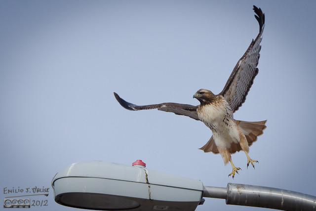 Impressive takeoff.