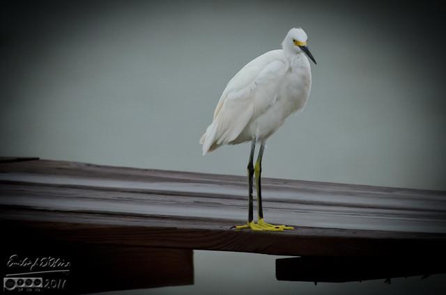 egret unimpressed