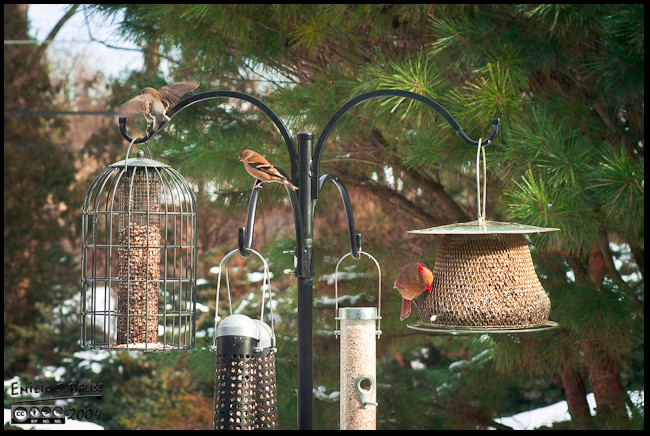Our winter feeders arrangement