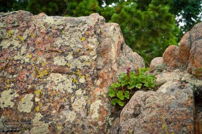 I am always amazed when plants grow seemingly right out of solid rock
