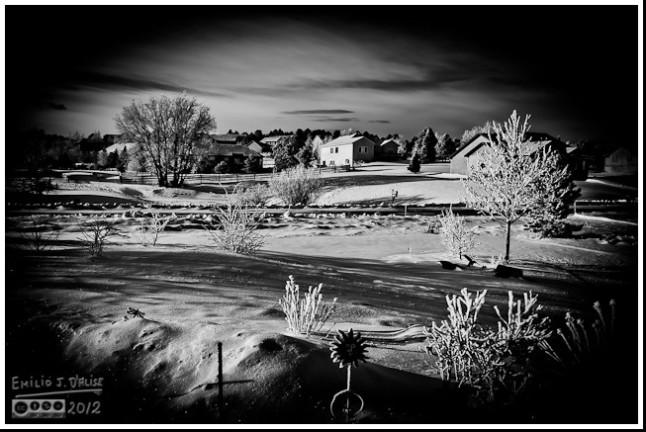 Front yard in B&W
