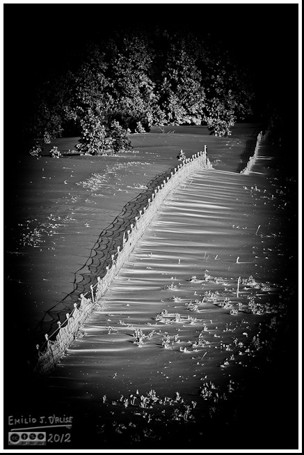 The fence in B&W