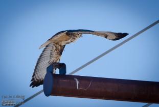 Taking off against a stiff breeze