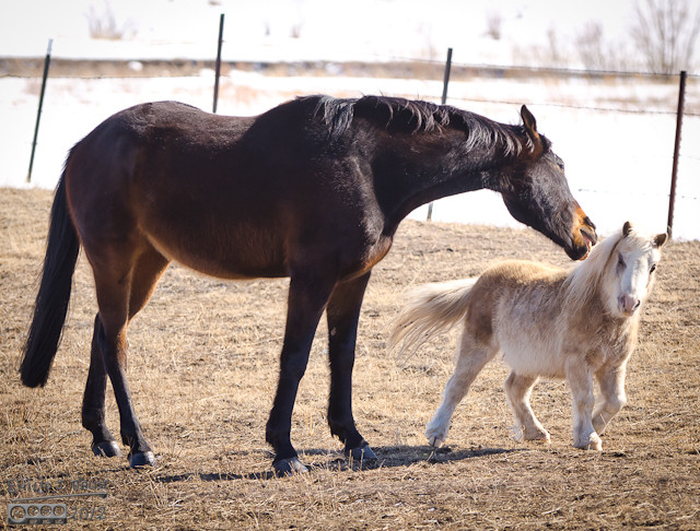 I know horse nip at each other for various reasons, but these guys looked like they were playing.