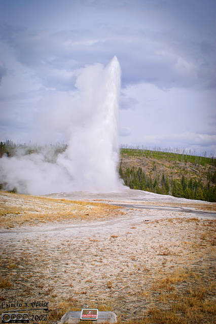 Old Faithful doing its thing