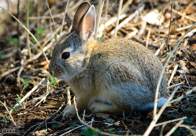 This rabbit was sitting just to the edge of the path.  I would never have noticed them except he moved.