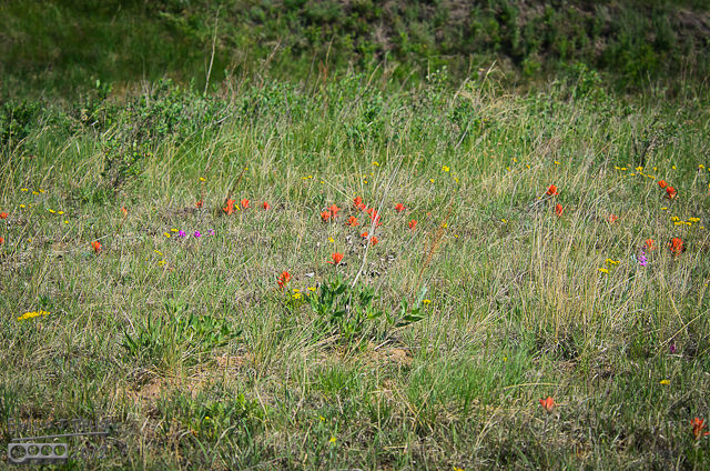 This is a small patch, but there are fields with large expanses of wildflowers.
