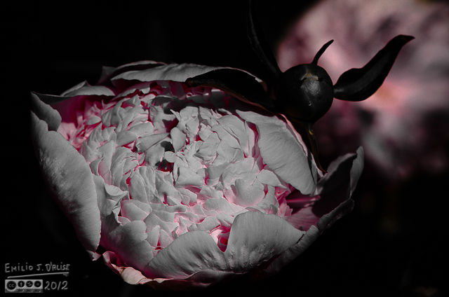 I wanted to make this appear as smoldering embers inside the flower.
