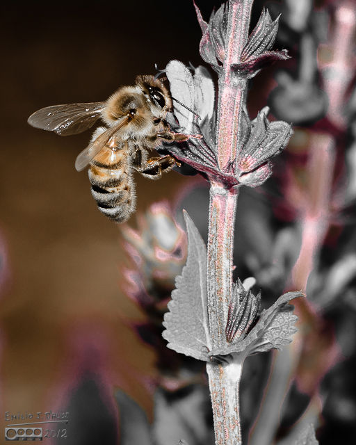 I think it worked very well on the bee photographs.