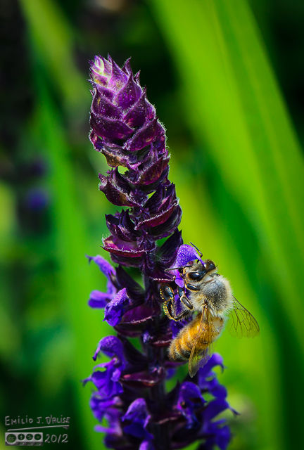 I do like the detail on the bees . . .