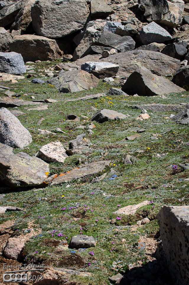 My scenery album showed a lot of rocks . . . what perhaps was not evident is what's between those rocks.