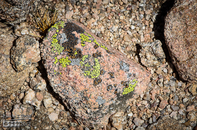 And yes, the rocks and lichen are also an interesting visual treat.