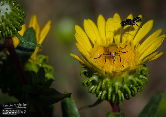 The beetle basically ignored the bee, and did not budge.