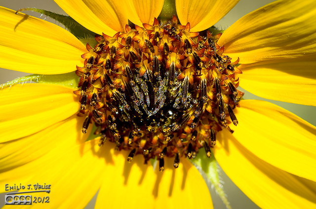 """At first I thought those """"spidery"""" things were insect legs, but no. They are part of the flower."""