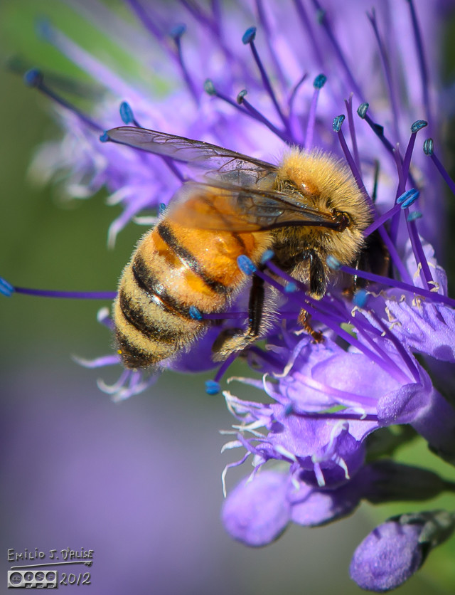 There are many bee shots in the Gallery.  But, some people like that.