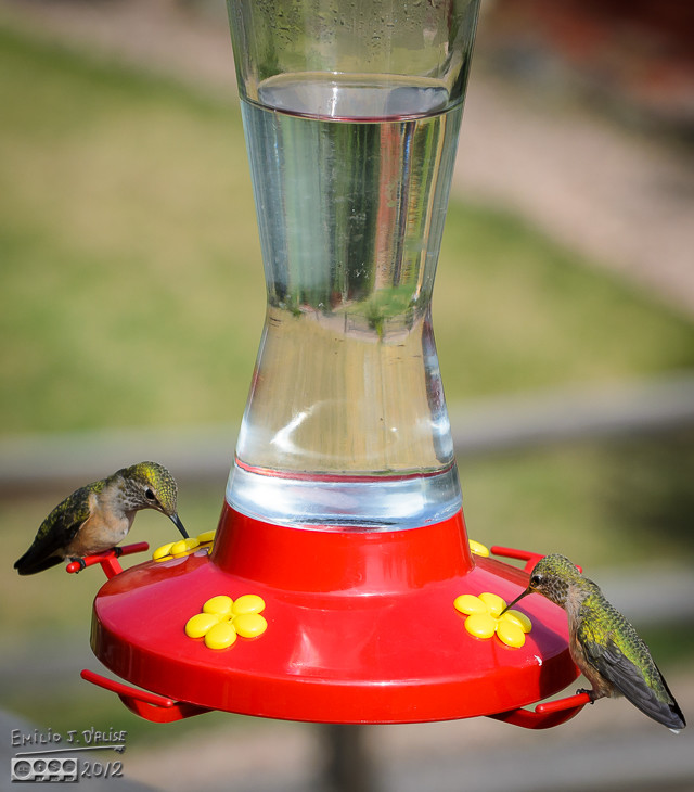 Ahhh . . . a peaceful moment at the feeder.