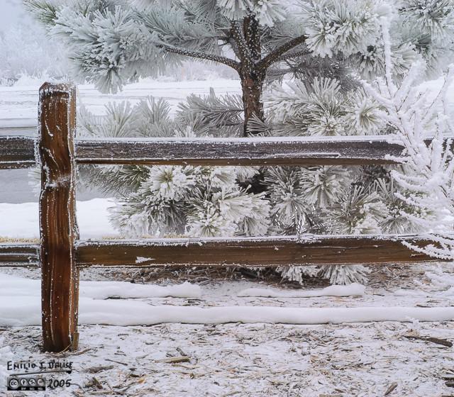0012_SnowDay_07FEB05