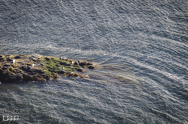 Some seals resting on some rocks.