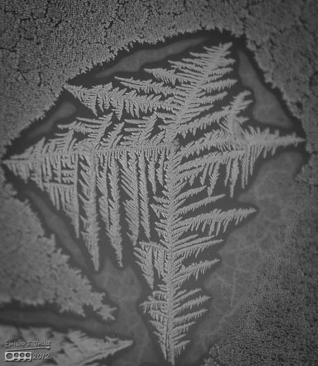 Ice crystals formations on glass - Sky Shark
