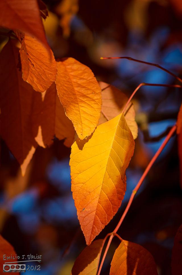 Foliage 2013