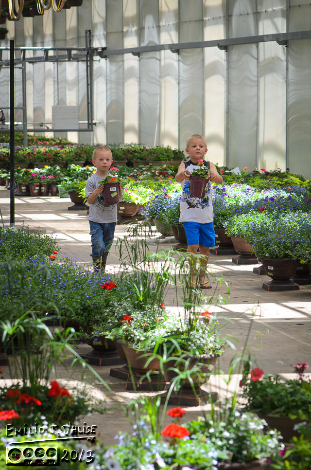 Dutch Heritage Nursery,