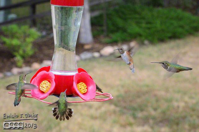 Fight or Flight!