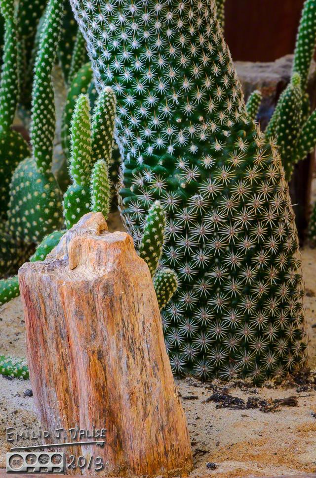 Cacti,