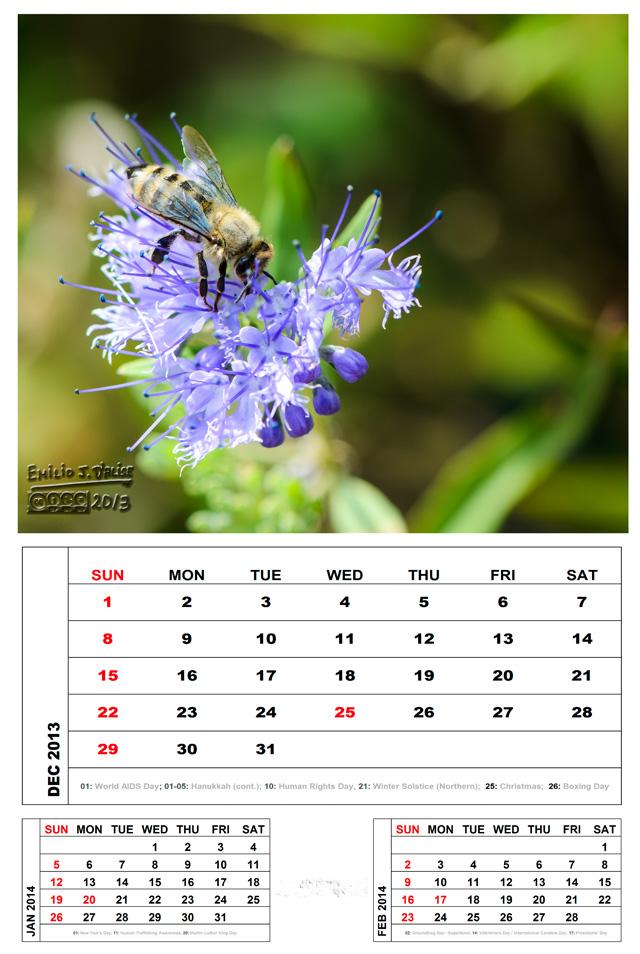 December 2013 - The Bee