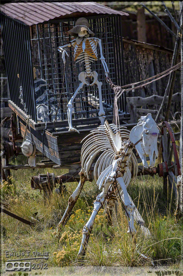 . . . a horse skeleton with pink sunglasses . . .