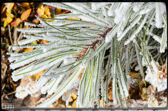 Morning Frost,