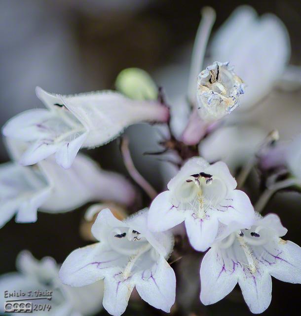 Flowers,