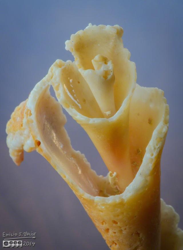 macro, sea shells,
