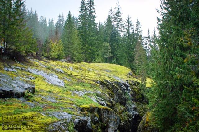 0041-Mt_Rainier_Drive_DIGI
