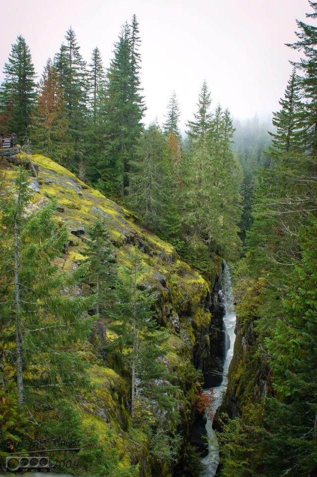 0051-Mt_Rainier_Drive_DIGI